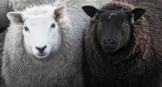 Zwart en wit gebroederlijk naast elkaar / Black and white brotherly next to each other