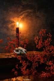 Konijnenschedel en kaarslicht / Rabbit skull and candle light / justinsinner.nl