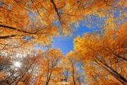 Herfsbos op Texel / Autumn forest on Texel