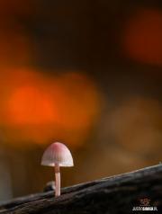 Klein paddestoeltje in het Texelse bos / Small mushroom in the Texel forest