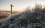 Winters duinlandschap op Texel / Wintry dune landscape on Texel
