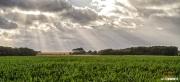 Landschap van Texel / Texel landscape