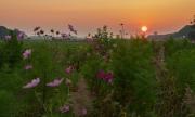 """Zonsondergang op Texel, gezien vanaf """"t Skillepaadje"""" / Sunset on Texel, as viewed from 't Skillepaadje'"""