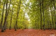 Herfstbos op Texel / Autimn forest on Texel