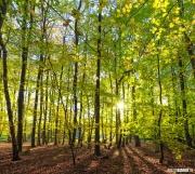 Lente bos op Texel / Spring forest on Texel. justinsinner.nl