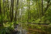 Het staatsbos op Texel in de lente / The state forest on Texel in spring