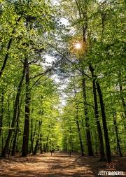 Het texelse bos in de lente, fris groen / Texel spring forest