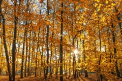 Herfstbos op Texel / Autumn forest on Texel. justinsinner.nl