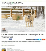 Texel lambs movie on Texelse Courant, febr 2017