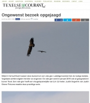 Griffon Vulture at Texel. may 2016 Texelse Courant
