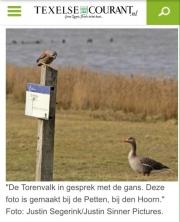 Torenvalk en Gans in gesprek, Texelse Courant mrt 2016