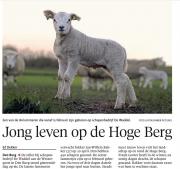 De eerste op de Hogeberg / First Lambs at Texel / NHD febr 2016