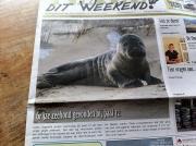 Zeehond Justin op de Voorpagina / Justin seal on the Frontpage / Texel dit Weekend febr 2013