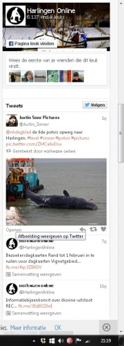 Stranding Potvissen op Texel / Dead sperm whales on Texel / Harlinger Nieuws jan 2016
