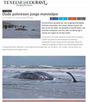 Stranding Potvissen op Texel / Dead sperm whales on Texel / Texelse Courant jan 2016