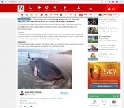 Stranding Potvissen op Texel / Dead sperm whales on Texel / TVGids jan 2016