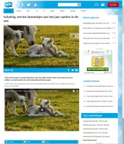 Texel lambs movie on RTV-NH, febr 2017