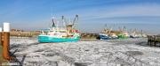 Panorama foto van een winterse haven van Oudeschild vol met ijs / Panoramic photo harbour of Oudeschild in winter