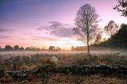 Mistig landschap op de Veluwe nabij Nunspeet (Glrld/NL) / Misty landscape on the Veluwe near de dutch city Nunspeet